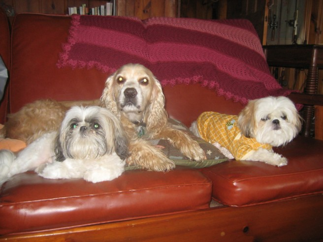 Lola, Max and Boq