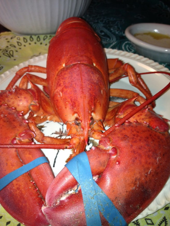 Lobster Specimen - Cooked to Perfection!