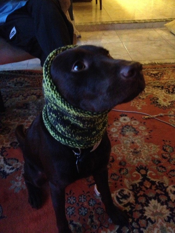 Monk models Willow's snood