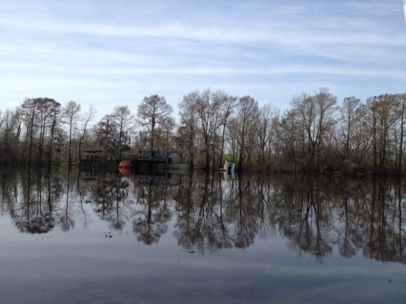 The Atchafalaya Swamp