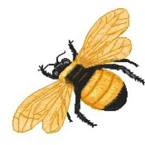 cropped-bee5am6.jpg